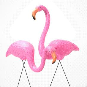 Where to find FLAMINGOES, PINK in Cary